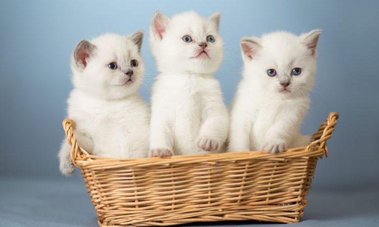 Nằm Mơ Thấy 3 Con Mèo Đánh Con Gì? Giải Mã Giấc Mơ Thấy 3 Con Mèo Đánh Số Mấy?